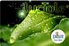 Logo-Carte-Luciole-2014-300x202.png