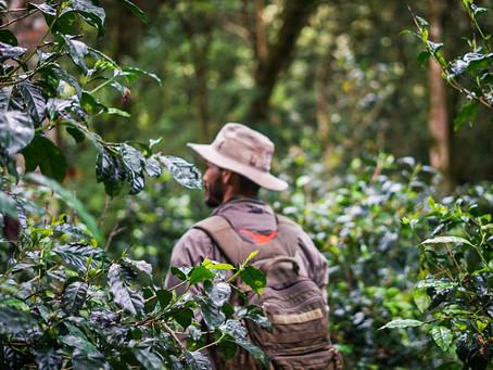 Nuguo ヌグオ Cafe Gallardo ガヤルド農園 パナマゲイシャの新たな流れ Best of Panama 2021優勝農園 Vol.1