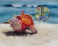 Murex Shell on the Beach