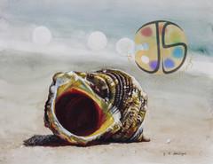 Chestnut Turbine Shell on the Beach