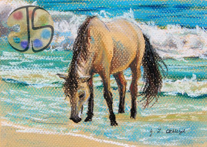 Coco on the Beach