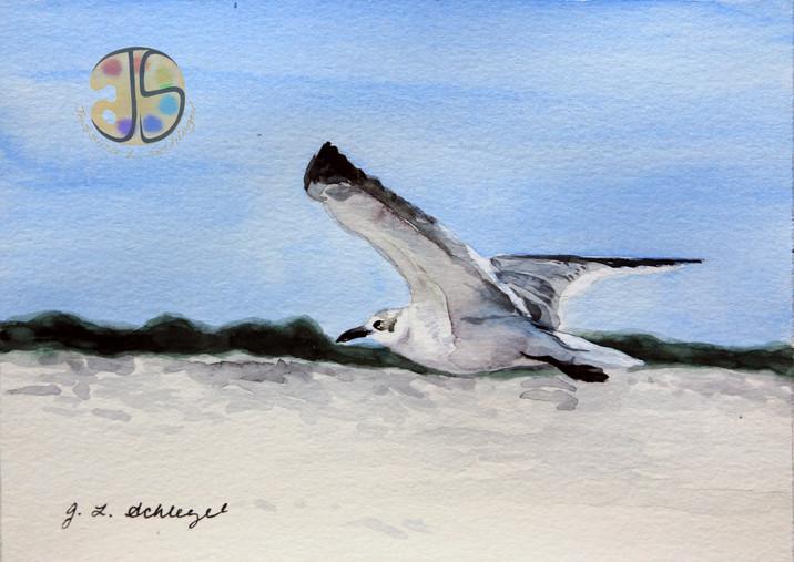 Seagull in Assateague