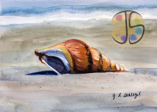 Seashell on the Beach, Assateague Island, MD