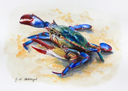 MD State Crustacean- Blue Crab