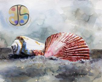 Seashells, Assateague Island, MD