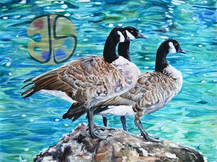 Geese Sunbathing