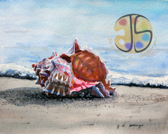 Seashell, Assateague Island, MD