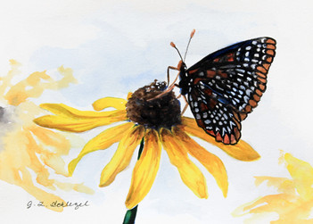 MD State FLower- Black-Eyed Susan, MD State Insect- Baltimore Checkerspot Butterfly