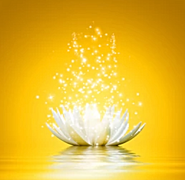 yellow_lotus_square.png