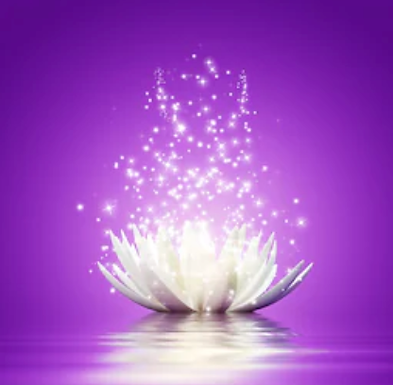 lotus_flower_purple_square.png