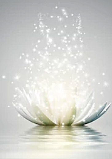 lotus_flower_gray.png