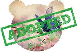 Adopted-SpringBear-Butterfly.jpg