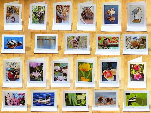 select card assortment