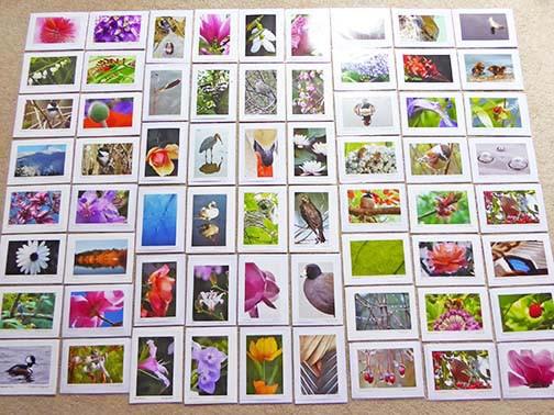sample card assortment