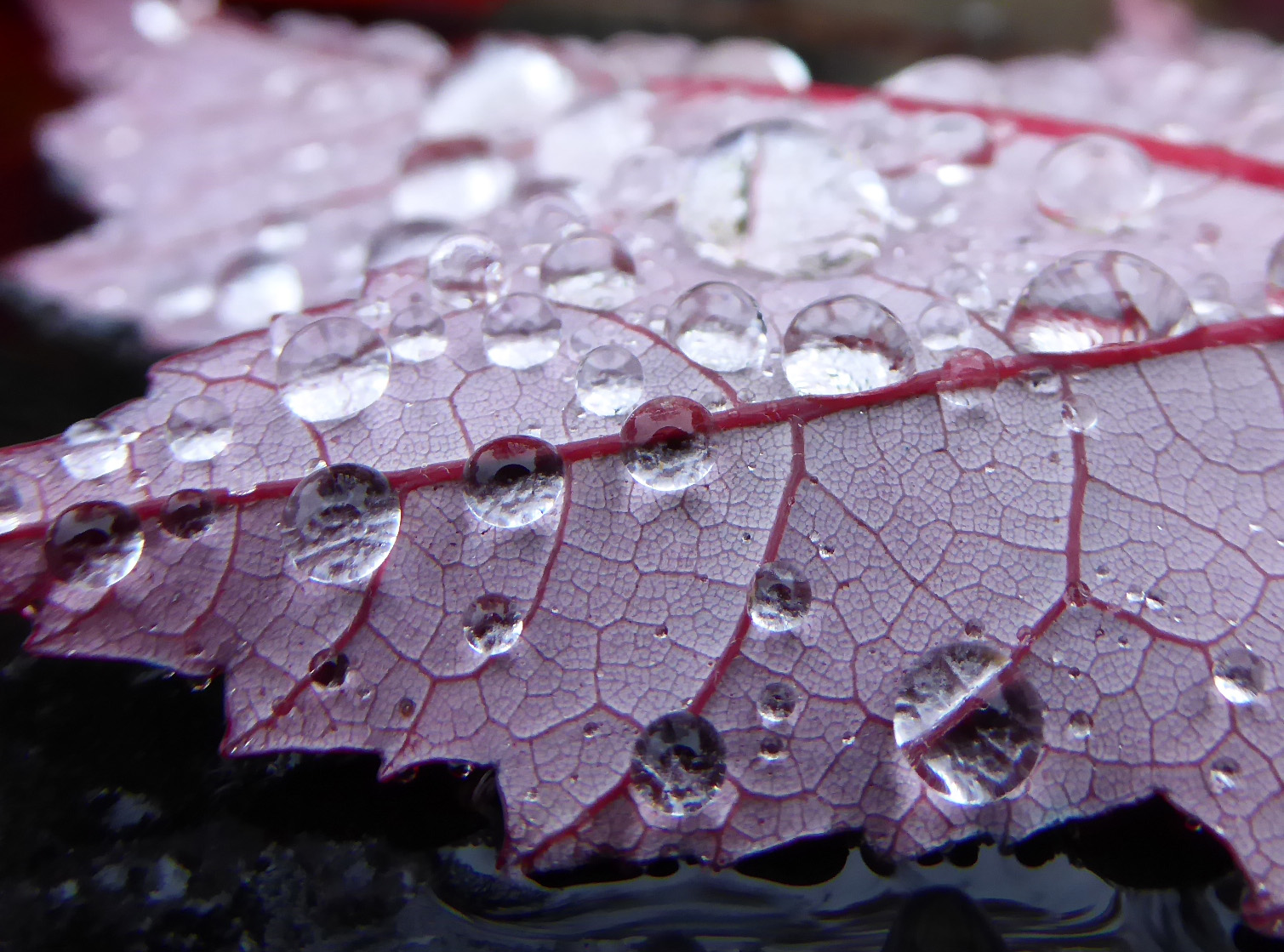 Raindrops on fall leaves