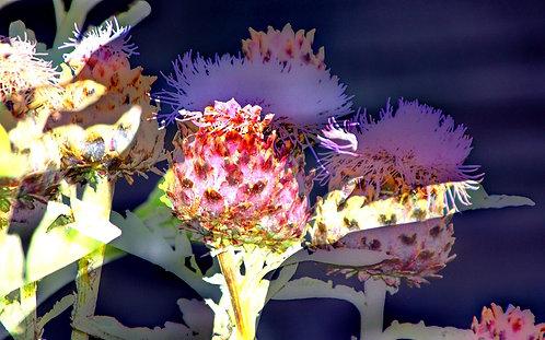 'Botanical Beauty'