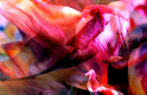 'Red Jewel'