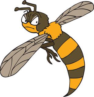 Wasp illustration.jpg