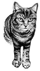 Cat illustration.jpg