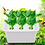 Thumbnail: Thrive-My Frist Organic Garden