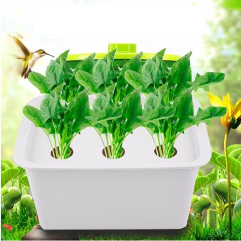 Thrive-My Frist Organic Garden