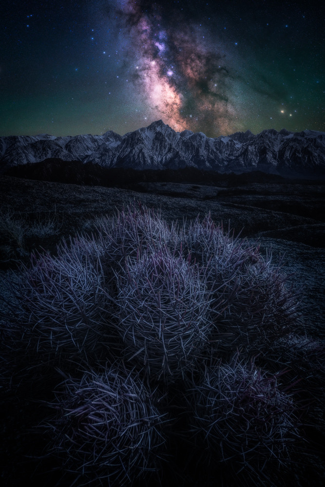 cactus and milky way in the alabama hills