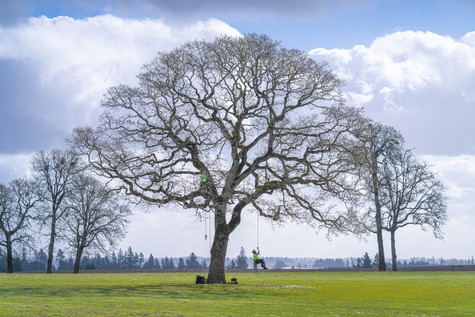General Tree Service