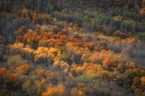 Autumn's Touch
