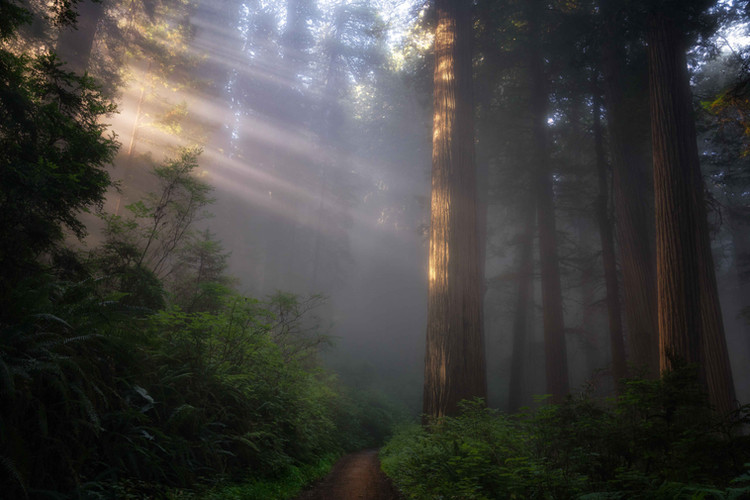 Image by Andrew Herr: 2019 Oregon Coast Workshop