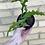 Thumbnail: Ric Rac Cactus