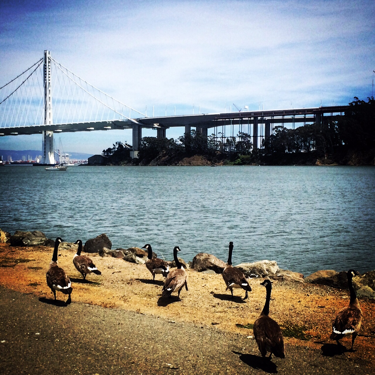 Bay Bridge & Friends