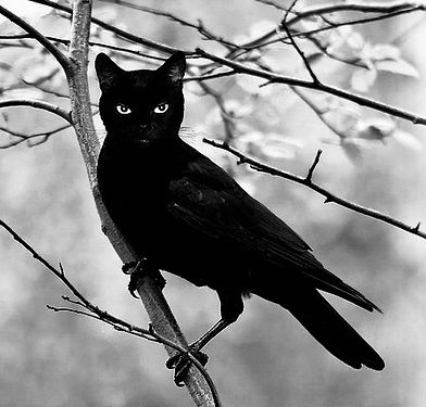 black cat raven.jpeg
