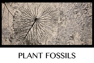 Button Plant Fossils (2).jpg