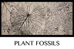 Button Plant Fossils (2).jpg