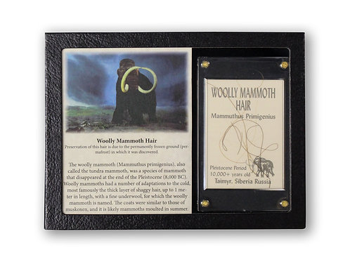Wooly Mammoth Hair Display