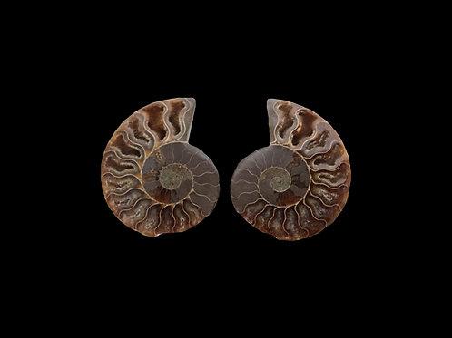 Sliced Ammonite Fossil Pair
