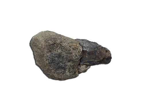 Jurassic Period Dinosaur Rib Bone
