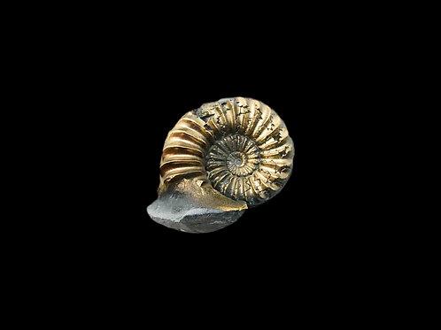 Pyritized Jurassic Ammonites