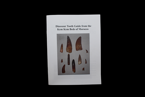 Dinosaur Tooth Guide from the Kem Kem Beds of Morocco