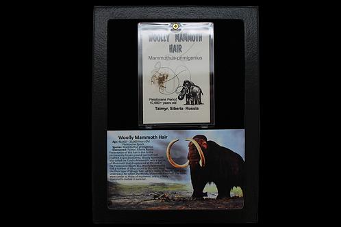 Woolly Mammoth Hair