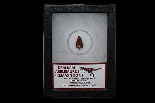 Kem Kem Abelisaurus Premax Tooth