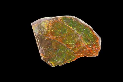 Ancient Ammolite