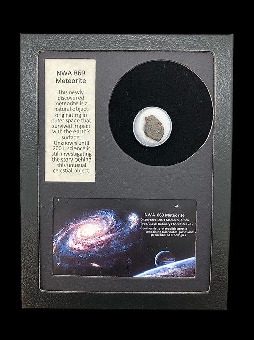 NWA 869 Meteorite