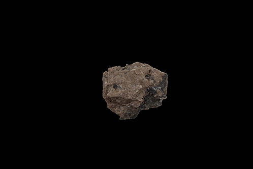 Texas Red Bed Permian Fossil