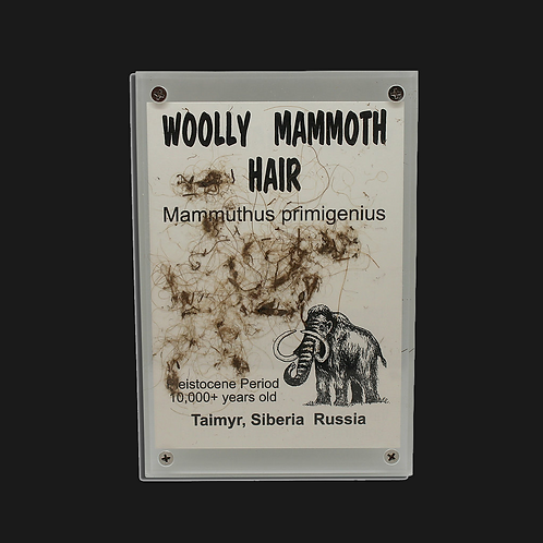 Woolly Mammoth Hair