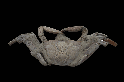 ANCIENT CRAB FOSSIL