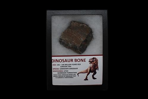 Jurassic Era Dinosaur Bone