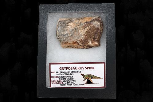Gryposaurus Spine
