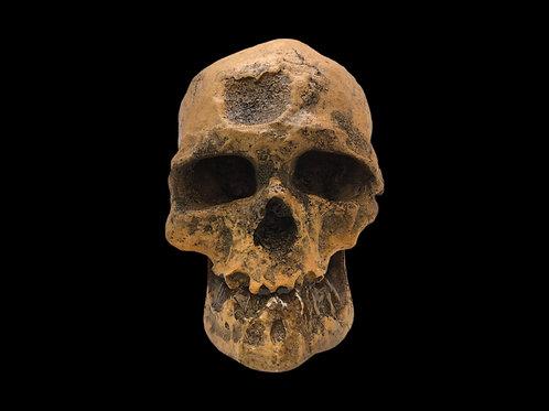 Hominid Skull - Cro Magnon 1