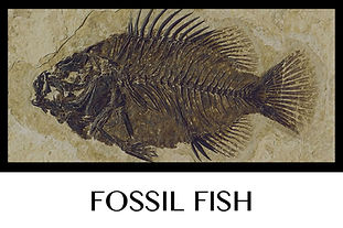 Button Fossil Fish.jpg